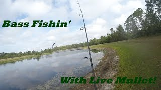 Bass Fishin' With Live Mullet - Florida