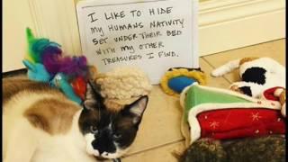 14 Funny Cat Shaming Moments Ep2
