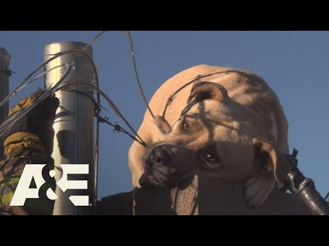 Live Rescue: Dog Saved From Wire Fence (Season 1) | A&E