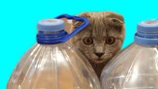 Лабиринт из бутылок для кошечек Джессики и Зефирки | Развлечения и веселье
