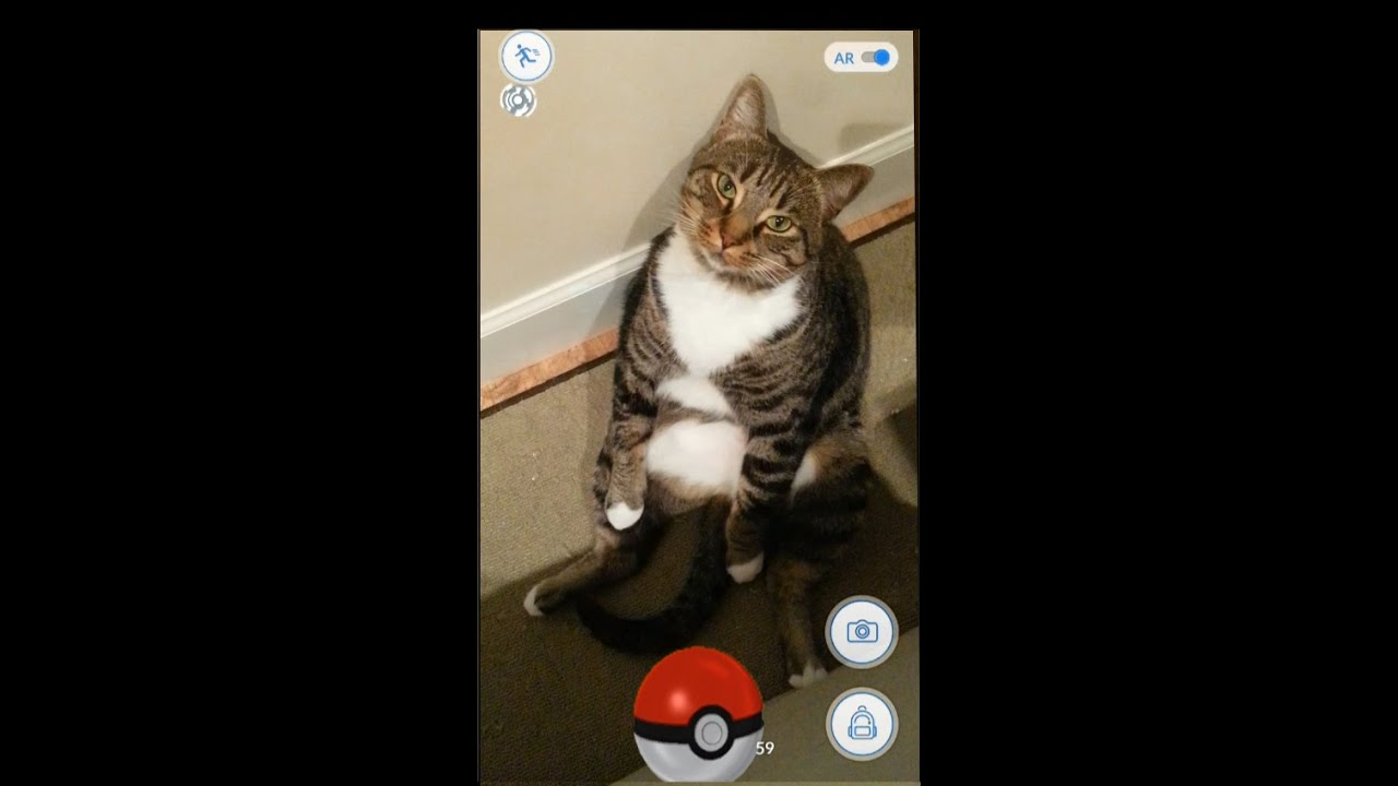 How to catch a Cat in Pokemon Go