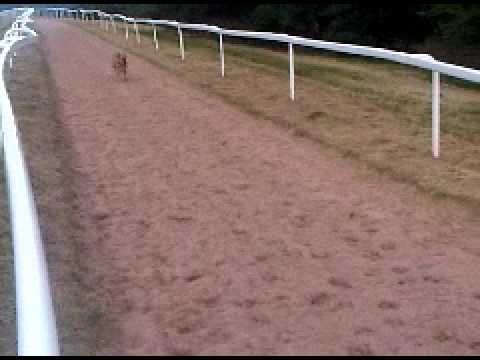 Daisy Dane thinking she is a race horse on the Epsom Gallops