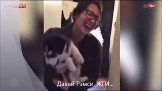Говорящий щенок