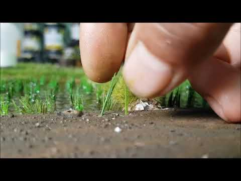 The making of paddy field diorama