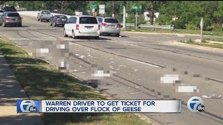 Man who ran over flock of geese to be ticketed