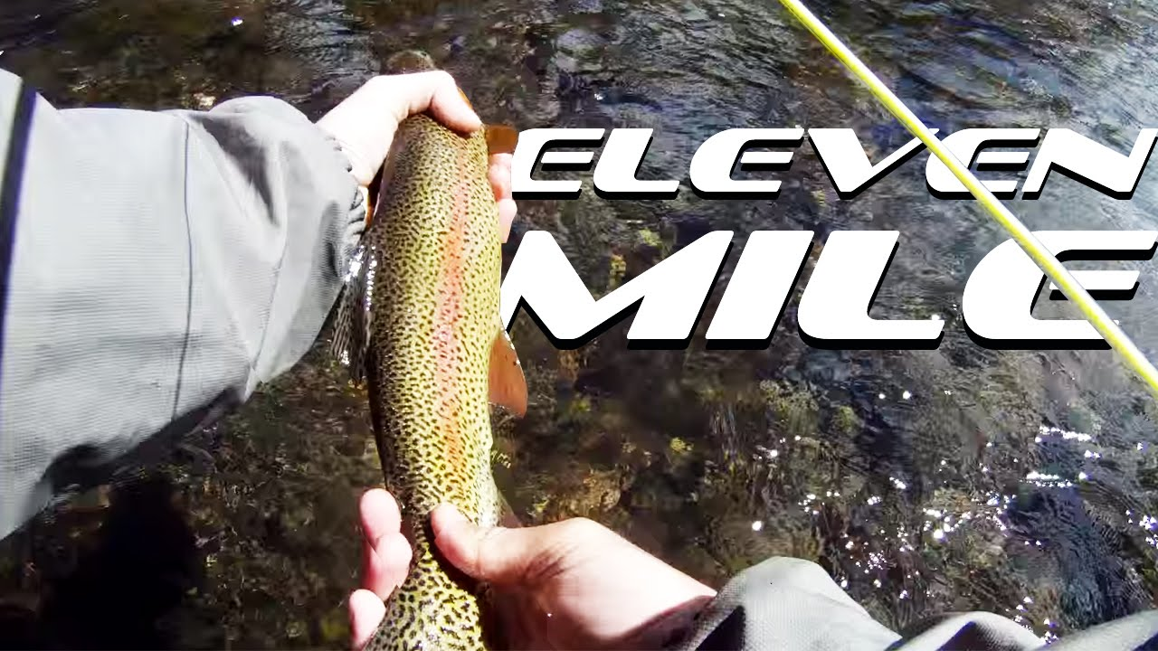 Fly fishing eleven mile canyon youtube for Eleven mile canyon fishing report