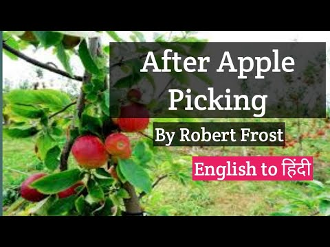 after apple picking robert frost english poetry english to  after apple picking robert frost english poetry english to hindi translations