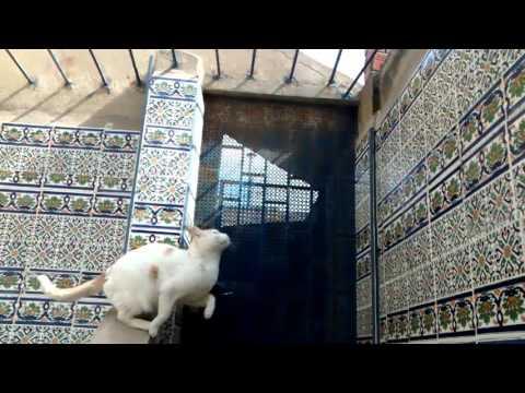 Cat jump - Slow Motion
