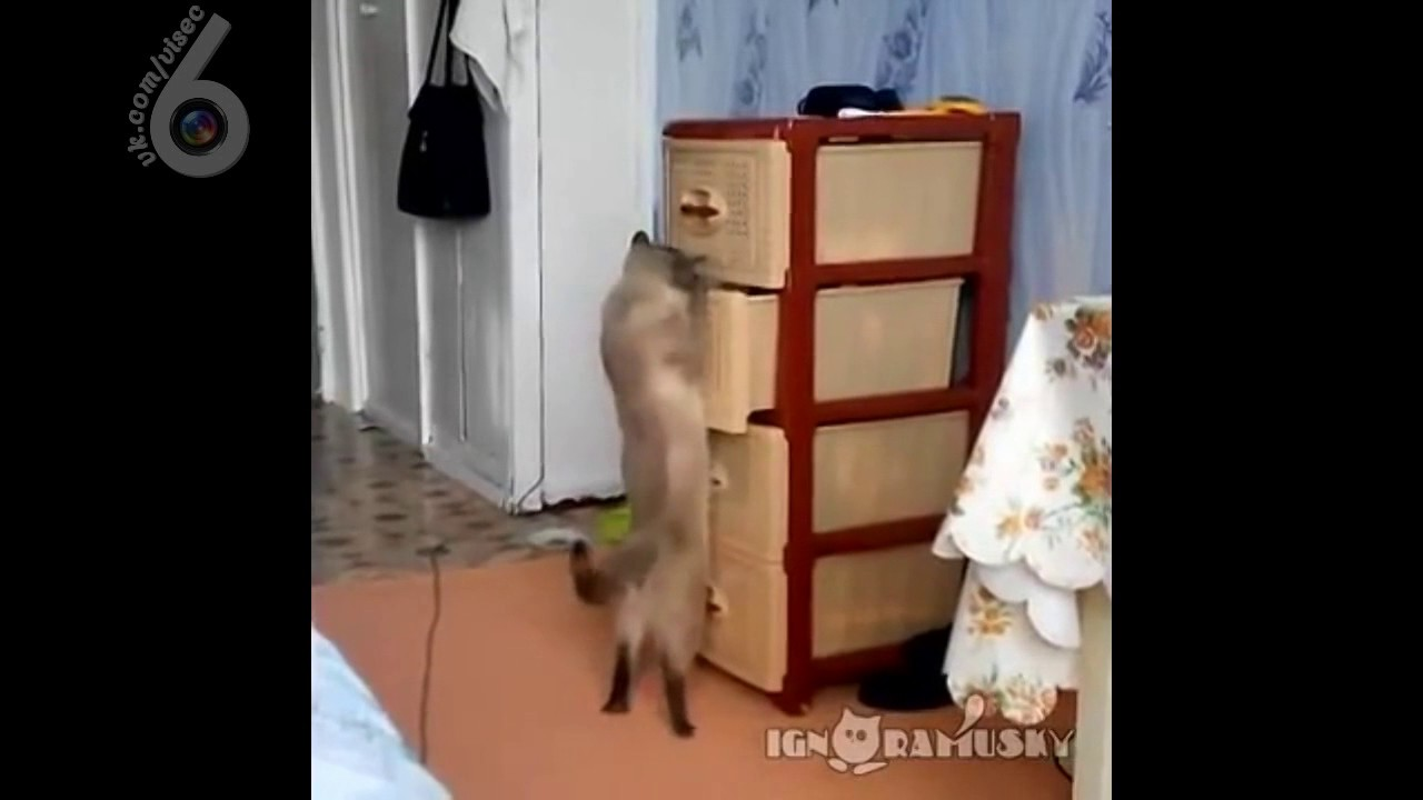 Завалить кот