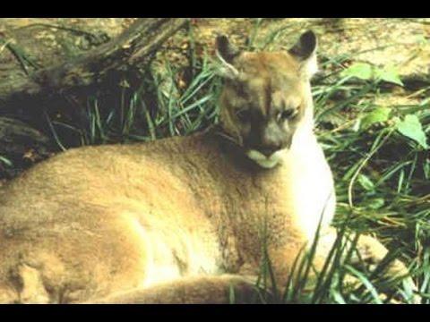 33 Species Hewan Yang Sudah Punah Dari Muka Bumi