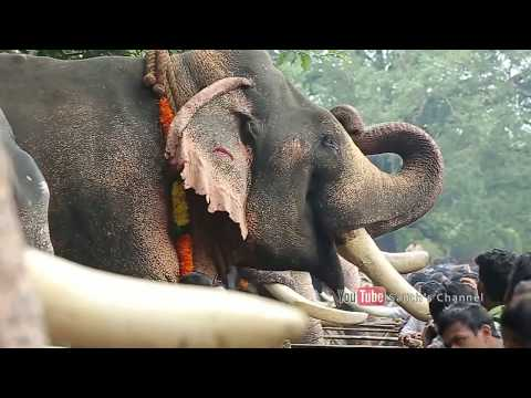 A story of Indian elephants