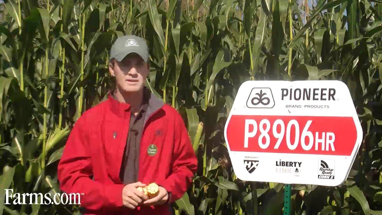Pioneer Hi-Bred Corn P8906HR 2650 CHU - YouTube