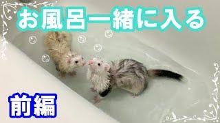 初めて二匹一緒にお風呂に入れてみました。 同じタイミングで入浴すると...