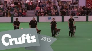 Obreedience - Part 3 - Japanese Akita Inu, Poodle, Schipperke & Lhasa Apso | Crufts 2015