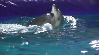 Шоу Дельфинов и пираты Карибского моря. Новогоднее представление.