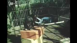 Думают ли животные? (1970)