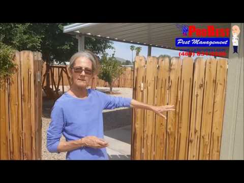 Termite Control Reviews / Testimonials in Gilbert, AZ ( Exterminators )