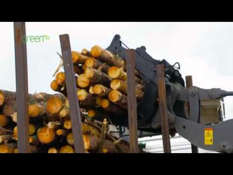 Investing in wood fuel