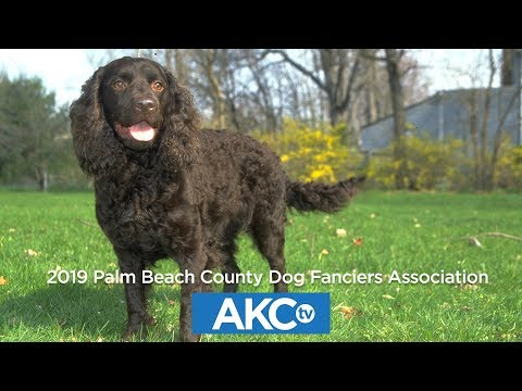 2019 Palm Beach County Dog Fanciers Association