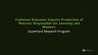 Cadmium Exposure Impairs Production of Neurons Responsible for Learning and Memory