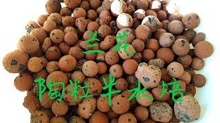 兰花陶粒半水培