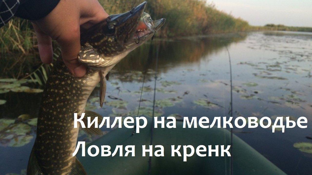 ловля на поппер и на мелководье