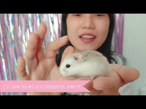 Introduce JiJu Hamster's Island - Jiju Roborovski Hamster And Baby