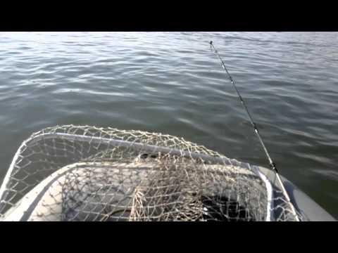 Ямаха 5 лодка кайман 275