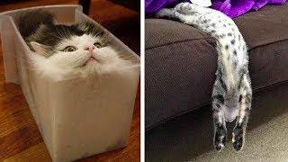 КОТ- ЭТО ЖИДКОСТЬ Смешные коты 2018 ТОПовая Подборка. Лучшие Приколы с котами