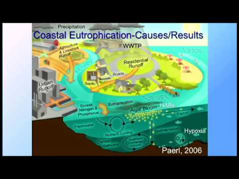 SoMAS - Global Coastal Eutrophication: From the Lorax (?) to Long Island Sound