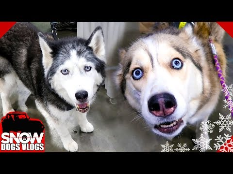 Happy Dogs Happy Pawdience | Novi Pet Expo