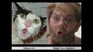 Коты так похожи на людей!