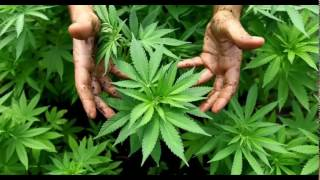 Reggae para Relajarse - Fumar Español - Stafaband