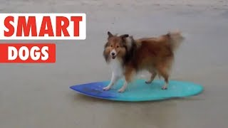 Smart Dogs | Funny Dog Compilation 2017