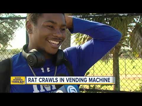AJ - Rat Crawling Inside a Florida School Vending Machine