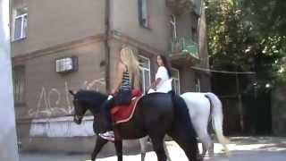Какие жо... лошади! )))