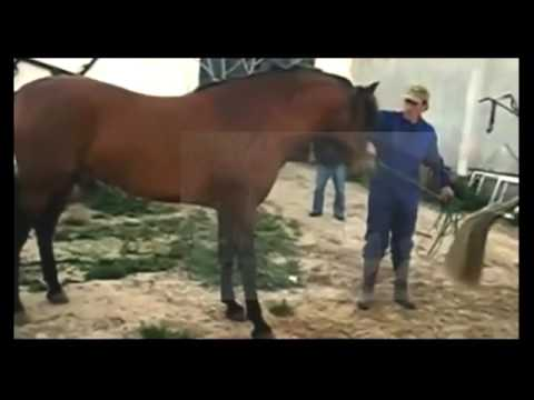 Jaguarian Horses Mating Compilation - First time on ...