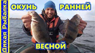 Где и как ловить окуня ранней весной Дикая рыбалка на крупного окуня с Андреем Ткаченко