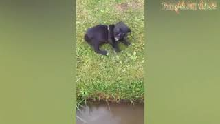 Animal Fails of the Week 4 August 2017   Animal Fails Compilation 2017