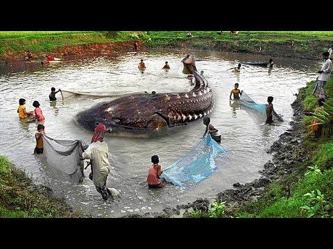 10 Biggest Sea Creatures