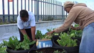 South African Heroes   Rooftop Gardens