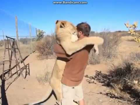 lion and man meet again billerica
