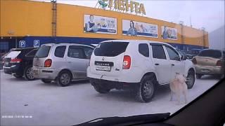 Собака-автосигнализака