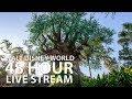 🔴 LIVE:  Walt Disney World 48+ Hour Live Stream 🏰🎢🎉 || Disney's Magic Kingdom