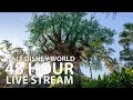 🔴 LIVE:  Walt Disney World 48+ Hour Live Stream 🏰🎢🎉 || Disney's Magic Kingdom