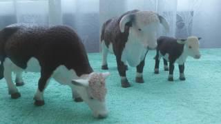 Обзор коров