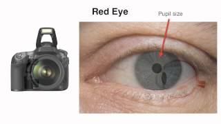 How to Reduce Red Eye in Photographs with John Greengo