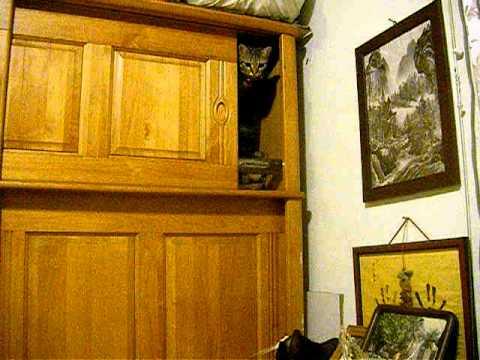 cat  Jump wardrobe
