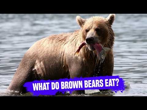 What Do Brown Bears Eat? Educational Information About Bear Diet