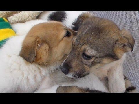 """Фильм """"Собаки зеркало Херсона"""". Как помочь животным"""
